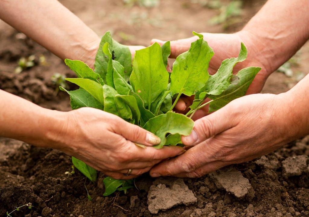 alimenti naturali-alimenti per rafforzare le difese immunitarie-difese immunitarie-per le difese immunitarie-aumentare le difese immunitarie-il melograno trieste