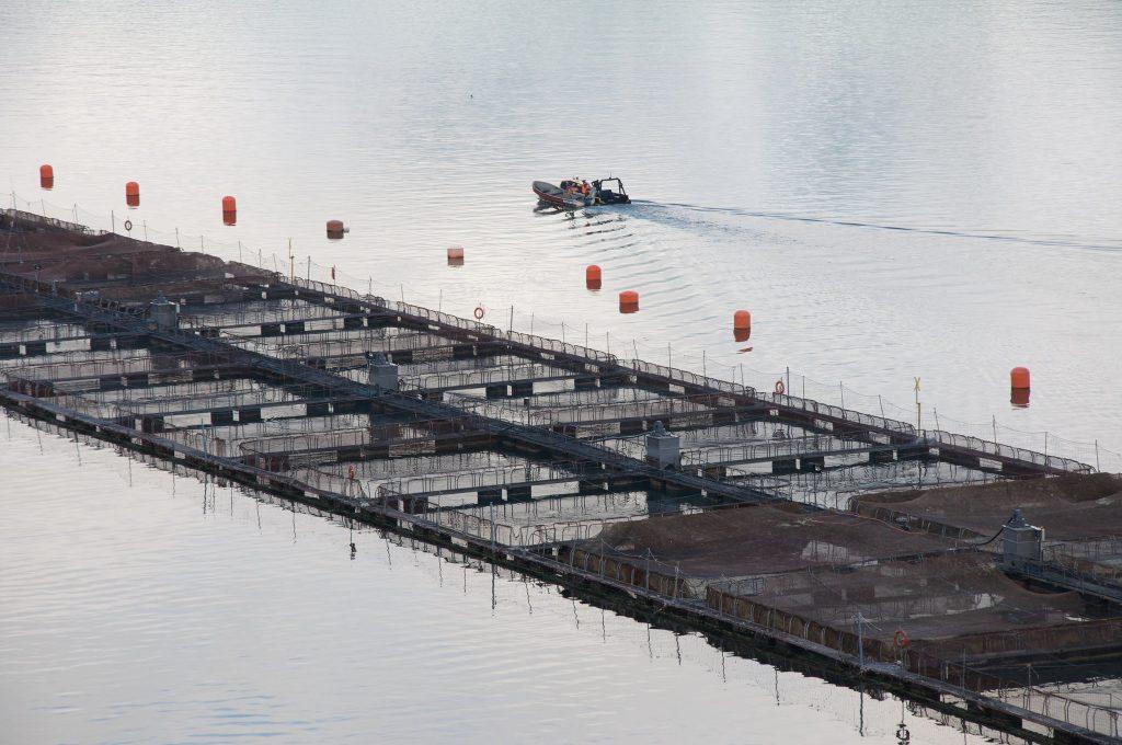 cypress island-allevamento intensivo-allevamento intensivo salmone-salmone